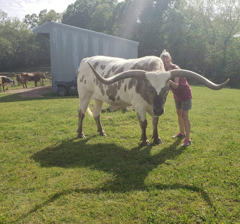 SSC professor poses with some cattle on her family farm.